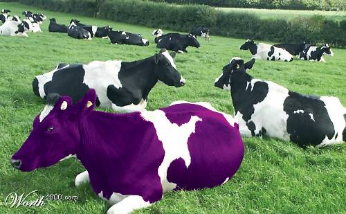 purple-cow2